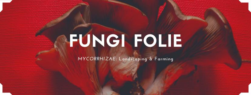 Fungi Folie Full Banner